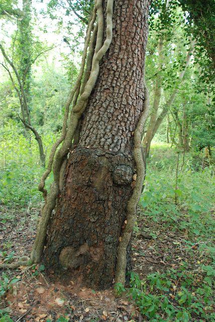 tree trunks and bark in TeazleWood