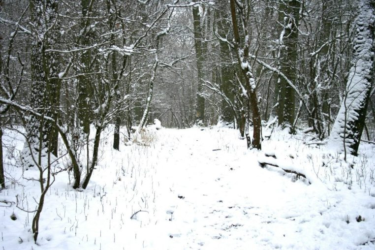 woodland snow