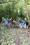 a group pulling logs and other items